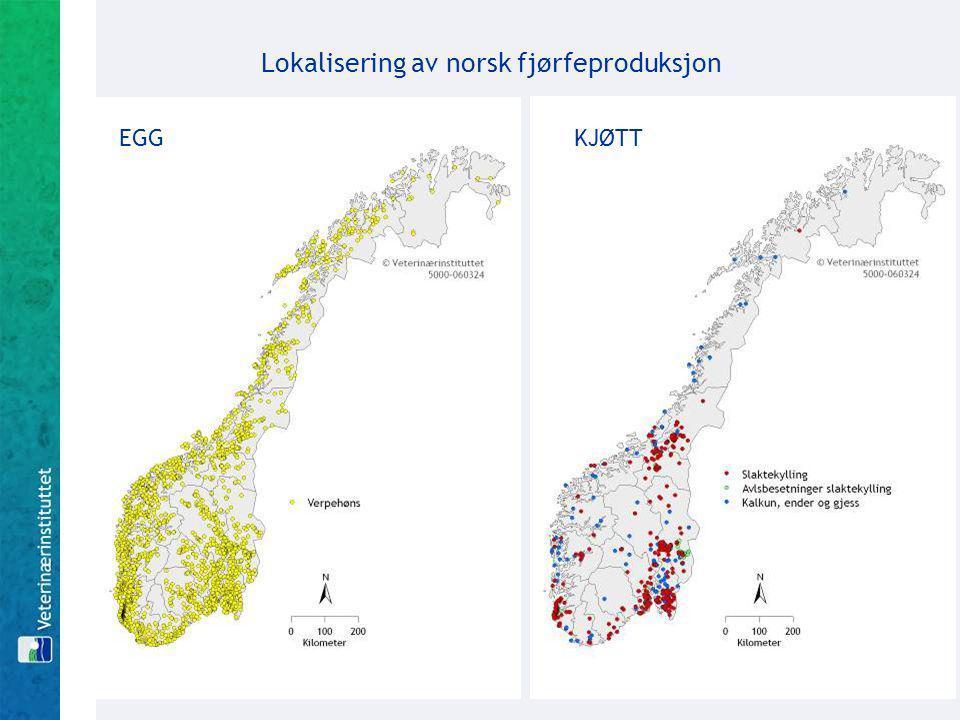 Lokalisering av norsk fjørfeproduksjon EGG KJØTT