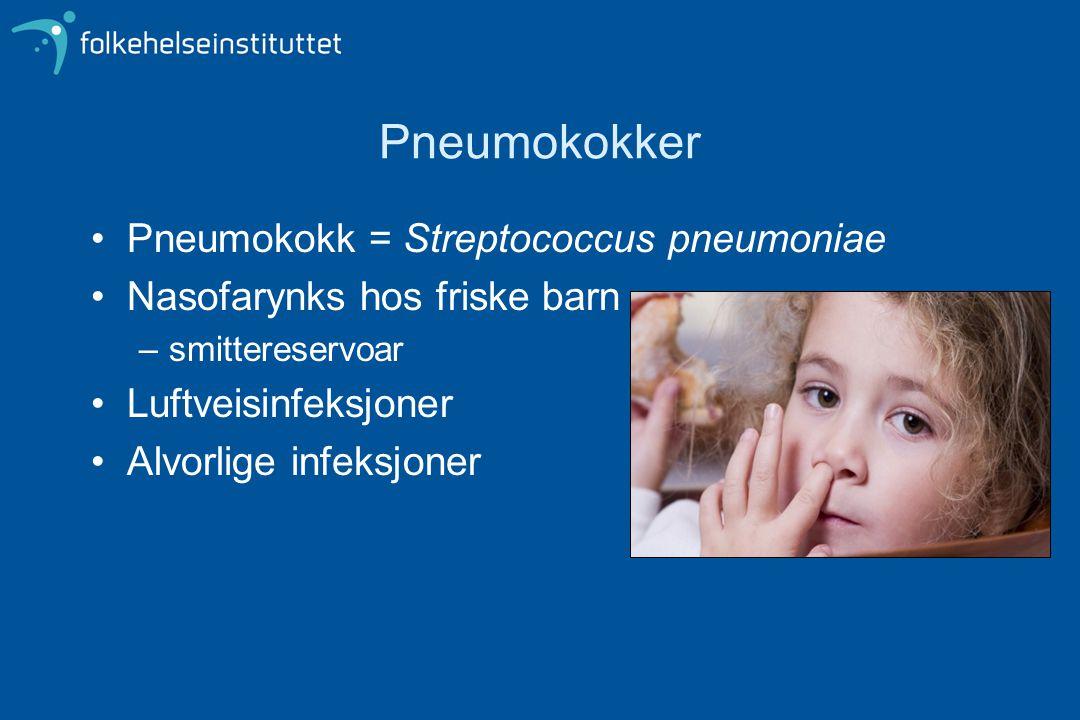 Pneumokokker Pneumokokk = Streptococcus pneumoniae Nasofarynks hos friske barn –smittereservoar Luftveisinfeksjoner Alvorlige infeksjoner