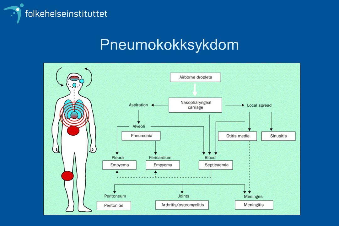Pneumokokker Polysakkaridkapsel 91 serotyper Ulik fordeling av serotyper hos bærere / syke, unge / eldre Kapselpolysakkarid benyttes i vaksiner