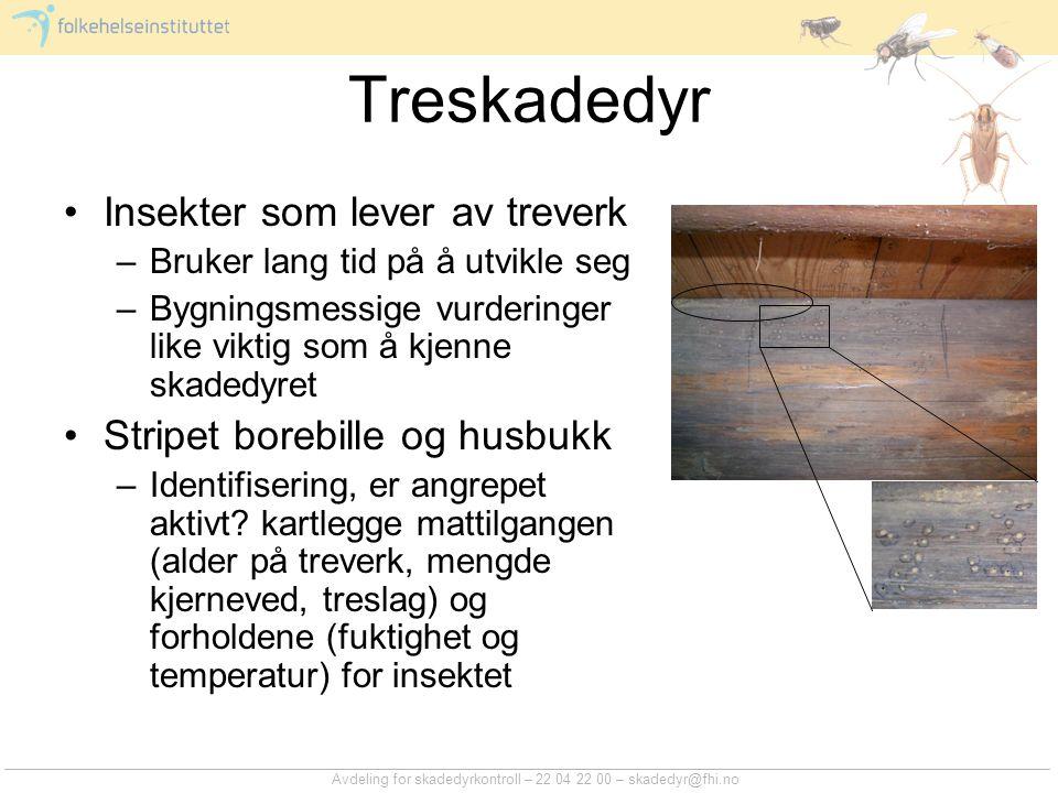Avdeling for skadedyrkontroll – 22 04 22 00 – skadedyr@fhi.no Treskadedyr Insekter som lever av treverk –Bruker lang tid på å utvikle seg –Bygningsmes