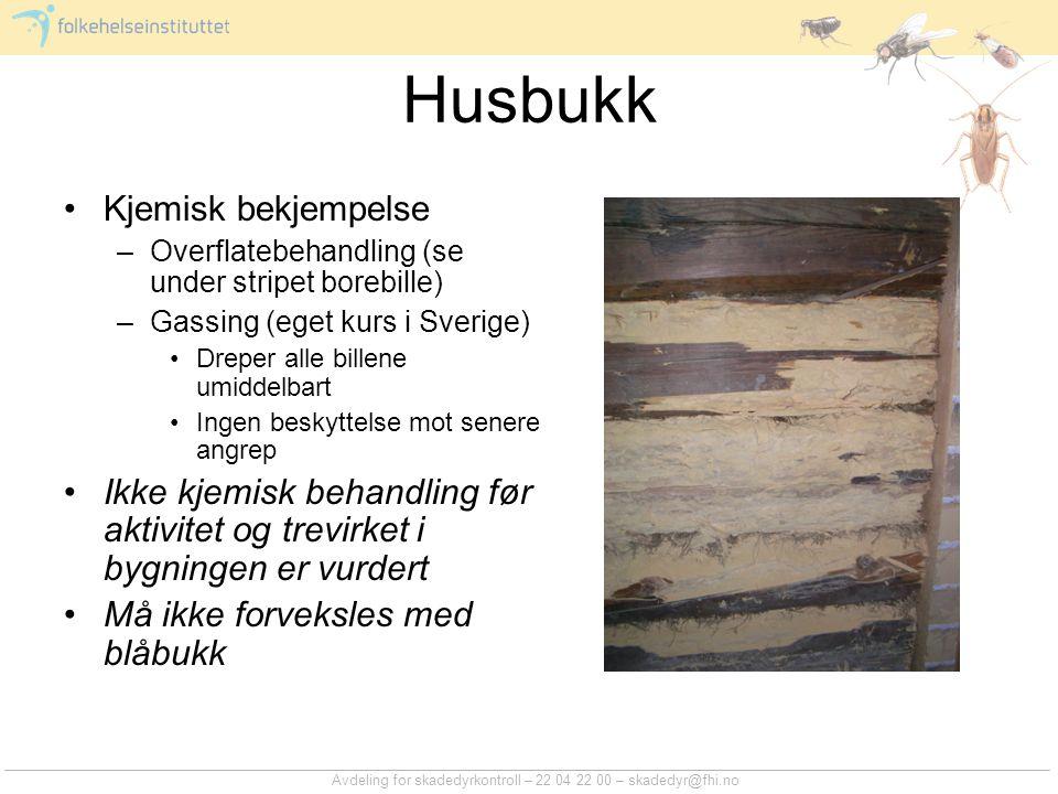 Avdeling for skadedyrkontroll – 22 04 22 00 – skadedyr@fhi.no Husbukk Kjemisk bekjempelse –Overflatebehandling (se under stripet borebille) –Gassing (