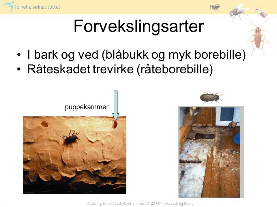 Avdeling for skadedyrkontroll – 22 04 22 00 – skadedyr@fhi.no Forvekslingsarter I bark og ved (blåbukk og myk borebille) Råteskadet trevirke (råtebore