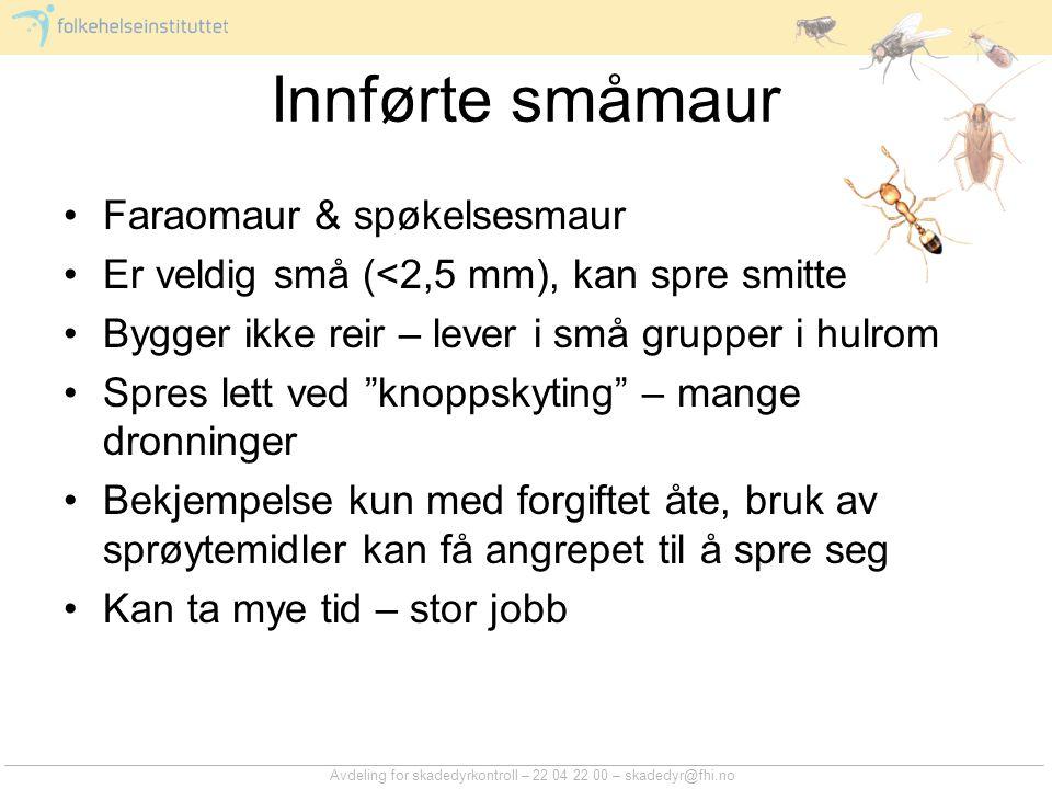 Avdeling for skadedyrkontroll – 22 04 22 00 – skadedyr@fhi.no Innførte småmaur Faraomaur & spøkelsesmaur Er veldig små (<2,5 mm), kan spre smitte Bygg