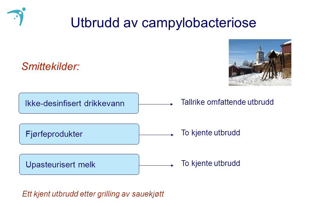 Campylobacteriose - Risikofaktorer i Norge l Drikke ikke-desinfisert drikkevann (>25%) l Tilberede eller spise fjørfeprodukter kjøpt rått (10%) l Dårlig hygiene under grillmåltider l Kontakt med dyr (storfe, sau, fjørfe, kjæledyr) l Spise ufullstendig varmebehandlet svinekjøtt l Drikke upasteurisert melk Godt dokumentert - Må oppdateres 4 kasus-kontroll-undersøkelser, sist i 1999-2000:
