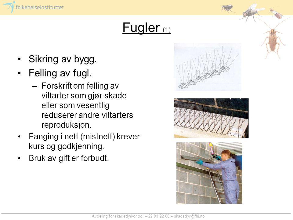 Avdeling for skadedyrkontroll – 22 04 22 00 – skadedyr@fhi.no Fugler (1) Sikring av bygg. Felling av fugl. –Forskrift om felling av viltarter som gjør