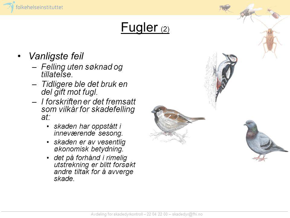 Avdeling for skadedyrkontroll – 22 04 22 00 – skadedyr@fhi.no Fugler (2) Vanligste feil –Felling uten søknad og tillatelse. –Tidligere ble det bruk en