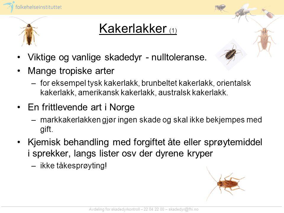 Avdeling for skadedyrkontroll – 22 04 22 00 – skadedyr@fhi.no Kakerlakker (1) Viktige og vanlige skadedyr - nulltoleranse. Mange tropiske arter –for e