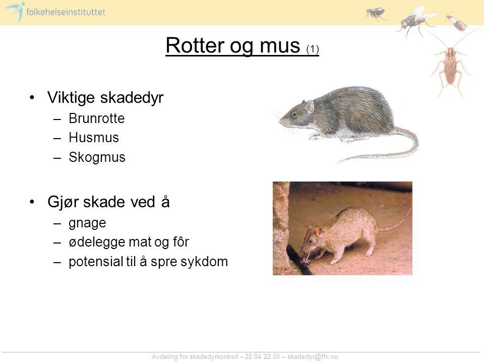 Avdeling for skadedyrkontroll – 22 04 22 00 – skadedyr@fhi.no Rotter og mus (1) Viktige skadedyr –Brunrotte –Husmus –Skogmus Gjør skade ved å –gnage –