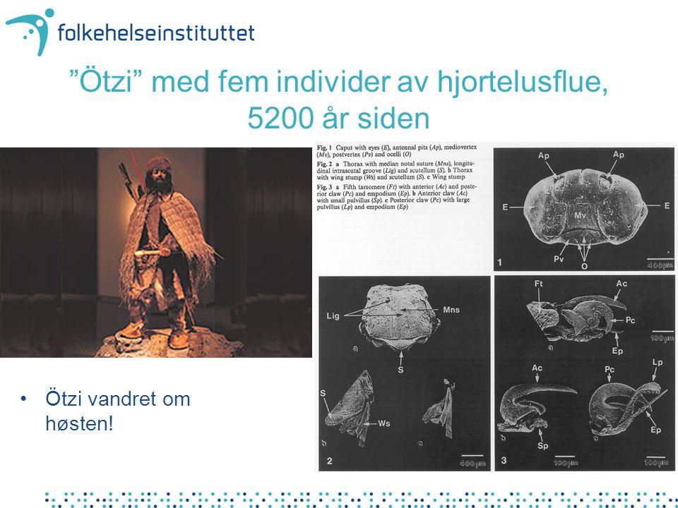 """Ötzi"" med fem individer av hjortelusflue, 5200 år siden Ötzi vandret om høsten!"