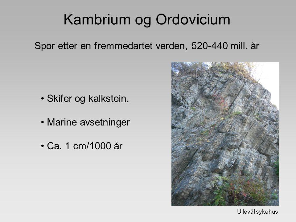 Kambrium og Ordovicium Spor etter en fremmedartet verden, 520-440 mill. år Skifer og kalkstein. Marine avsetninger Ca. 1 cm/1000 år Ullevål sykehus