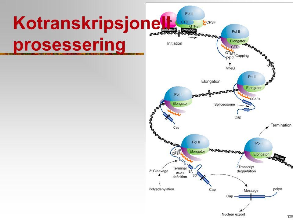 Kotranskripsjonell prosessering