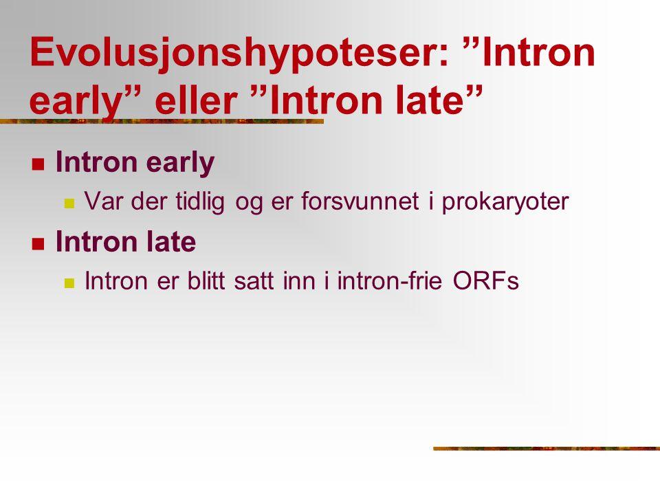 """Evolusjonshypoteser: """"Intron early"""" eller """"Intron late"""" Intron early Var der tidlig og er forsvunnet i prokaryoter Intron late Intron er blitt satt in"""