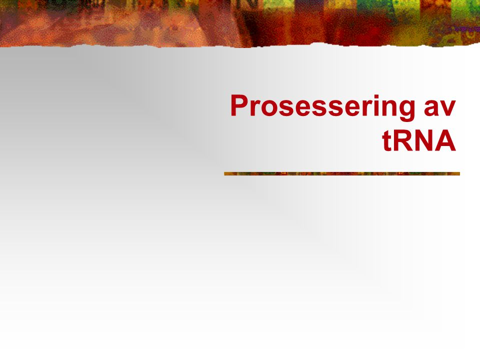 Prosessering av tRNA