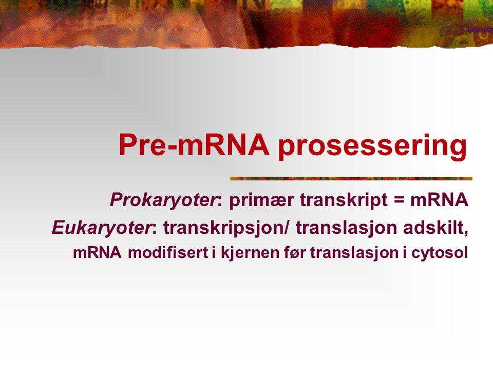 Pre-mRNA prosessering Prokaryoter: primær transkript = mRNA Eukaryoter: transkripsjon/ translasjon adskilt, mRNA modifisert i kjernen før translasjon