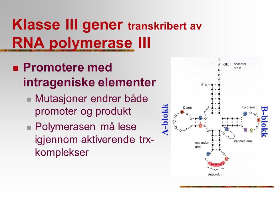 Klasse III gener transkribert av RNA polymerase III Promotere med intrageniske elementer Mutasjoner endrer både promoter og produkt Polymerasen må les