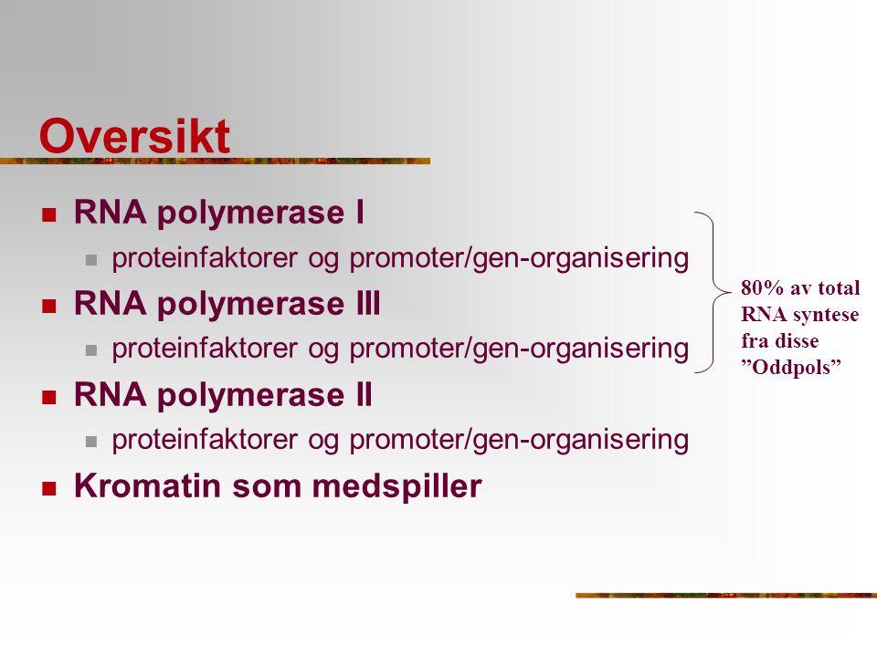 Klasse III gener: hjelpefaktorer involvert AC TFIIIC TFIIIB TBP RNAPIII I TFIIIA Type I promotere en type gen, en spesial faktor TFIIIA Sekvens: TFIIIA - TFIIIC - TFIIIB/TBP - RNAPIII