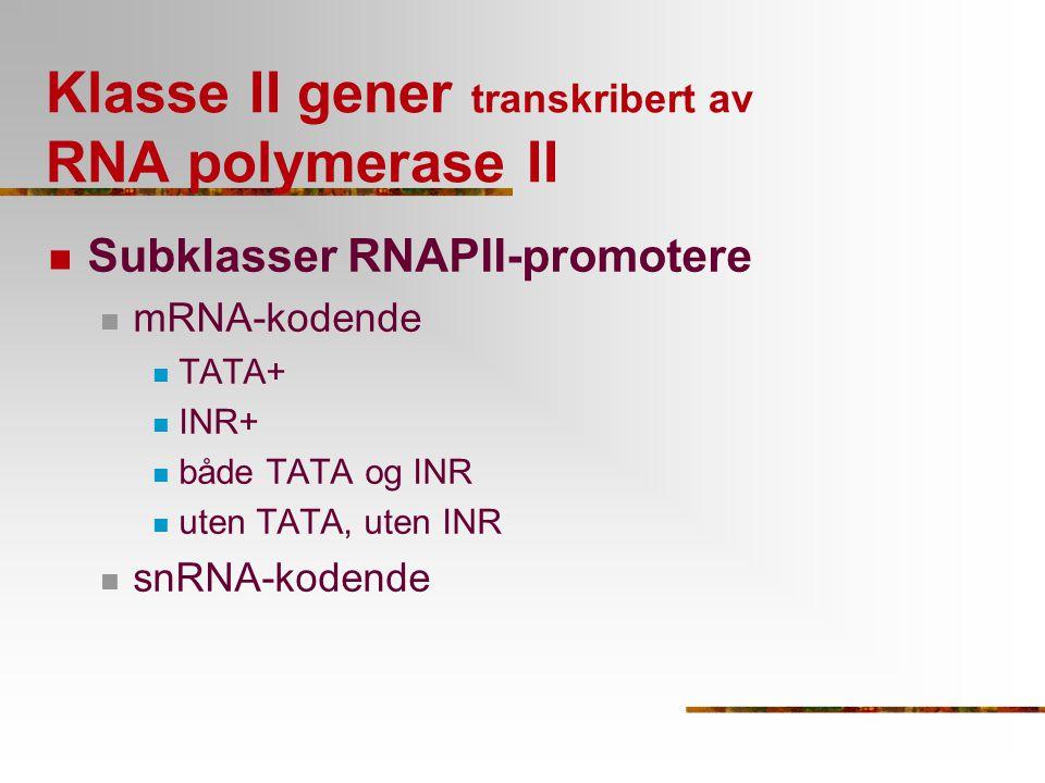 Klasse II gener transkribert av RNA polymerase II Subklasser RNAPII-promotere mRNA-kodende TATA+ INR+ både TATA og INR uten TATA, uten INR snRNA-koden