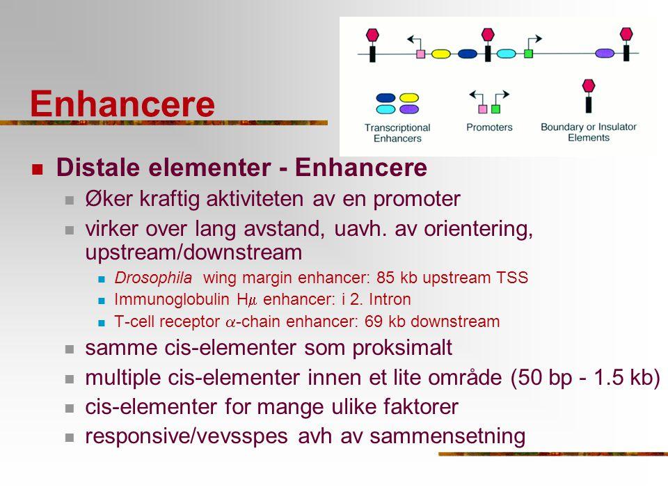 Enhancere Distale elementer - Enhancere Øker kraftig aktiviteten av en promoter virker over lang avstand, uavh. av orientering, upstream/downstream Dr