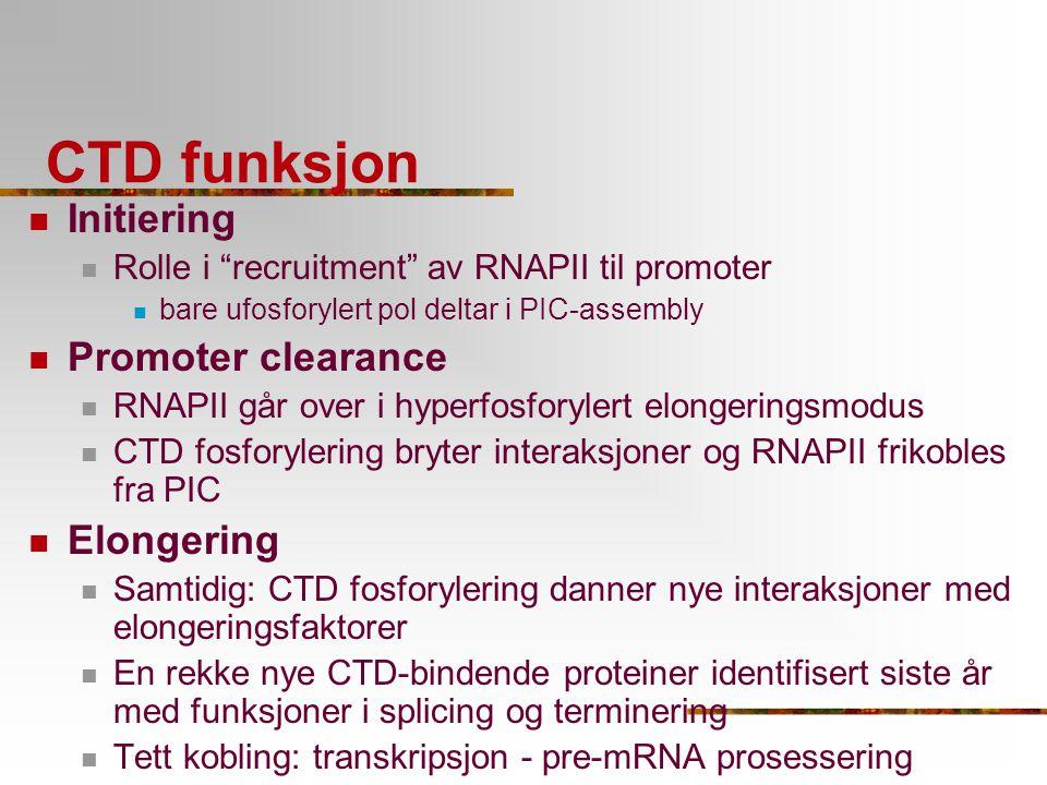 """CTD funksjon Initiering Rolle i """"recruitment"""" av RNAPII til promoter bare ufosforylert pol deltar i PIC-assembly Promoter clearance RNAPII går over i"""