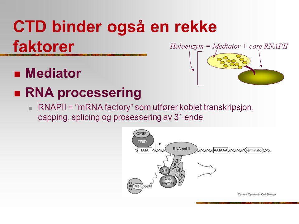 """CTD binder også en rekke faktorer Mediator RNA processering RNAPII = """"mRNA factory"""" som utfører koblet transkripsjon, capping, splicing og prosesserin"""
