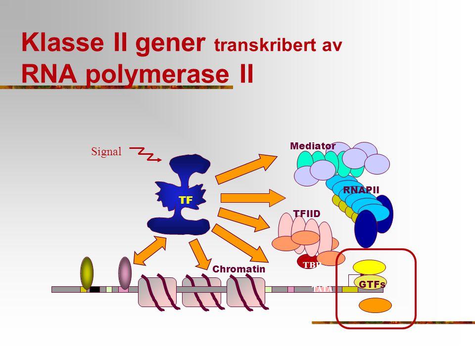 Klasse II gener transkribert av RNA polymerase II TATA TFIID TBP TF RNAPII Mediator GTFs Chromatin Signal