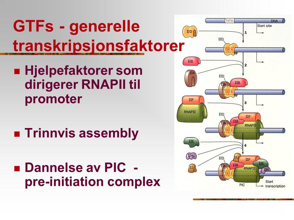 GTFs - generelle transkripsjonsfaktorer Hjelpefaktorer som dirigerer RNAPII til promoter Trinnvis assembly Dannelse av PIC - pre-initiation complex