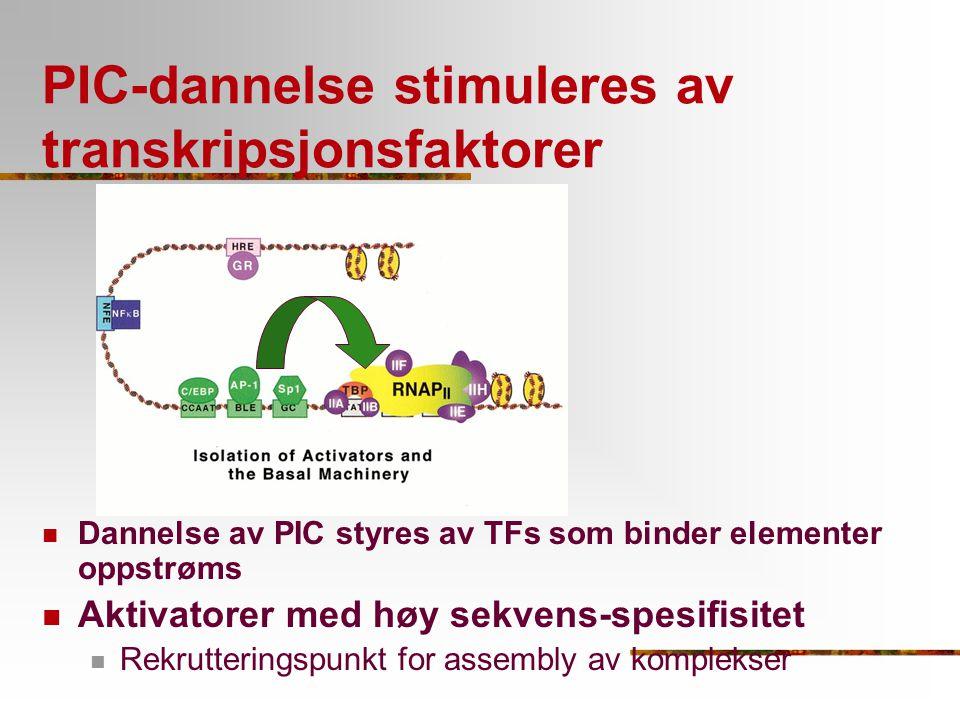 PIC-dannelse stimuleres av transkripsjonsfaktorer Dannelse av PIC styres av TFs som binder elementer oppstrøms Aktivatorer med høy sekvens-spesifisite