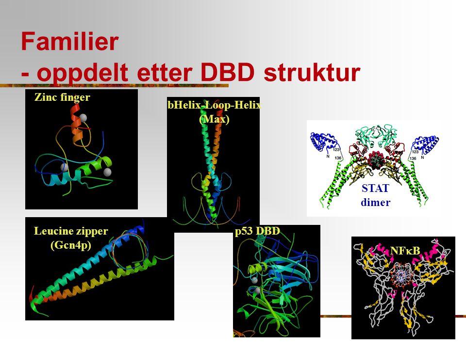 Familier - oppdelt etter DBD struktur bHelix-Loop-Helix (Max) Zinc finger Leucine zipper (Gcn4p) p53 DBD NF  B STAT dimer