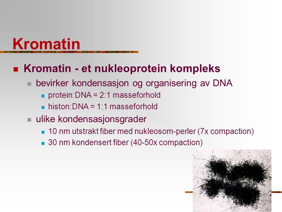 Kromatin Kromatin - et nukleoprotein kompleks bevirker kondensasjon og organisering av DNA protein:DNA = 2:1 masseforhold histon:DNA = 1:1 masseforhol