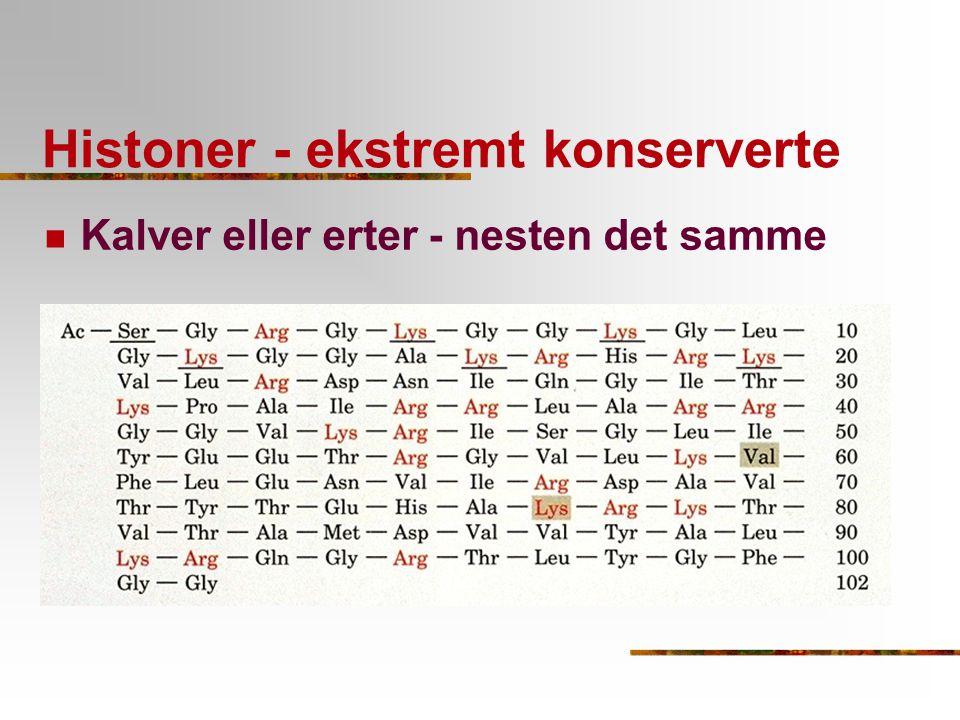 Histoner - ekstremt konserverte Kalver eller erter - nesten det samme