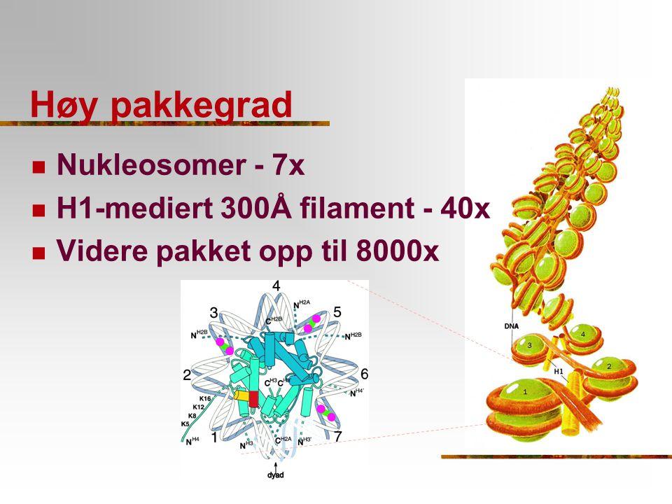 Høy pakkegrad Nukleosomer - 7x H1-mediert 300Å filament - 40x Videre pakket opp til 8000x