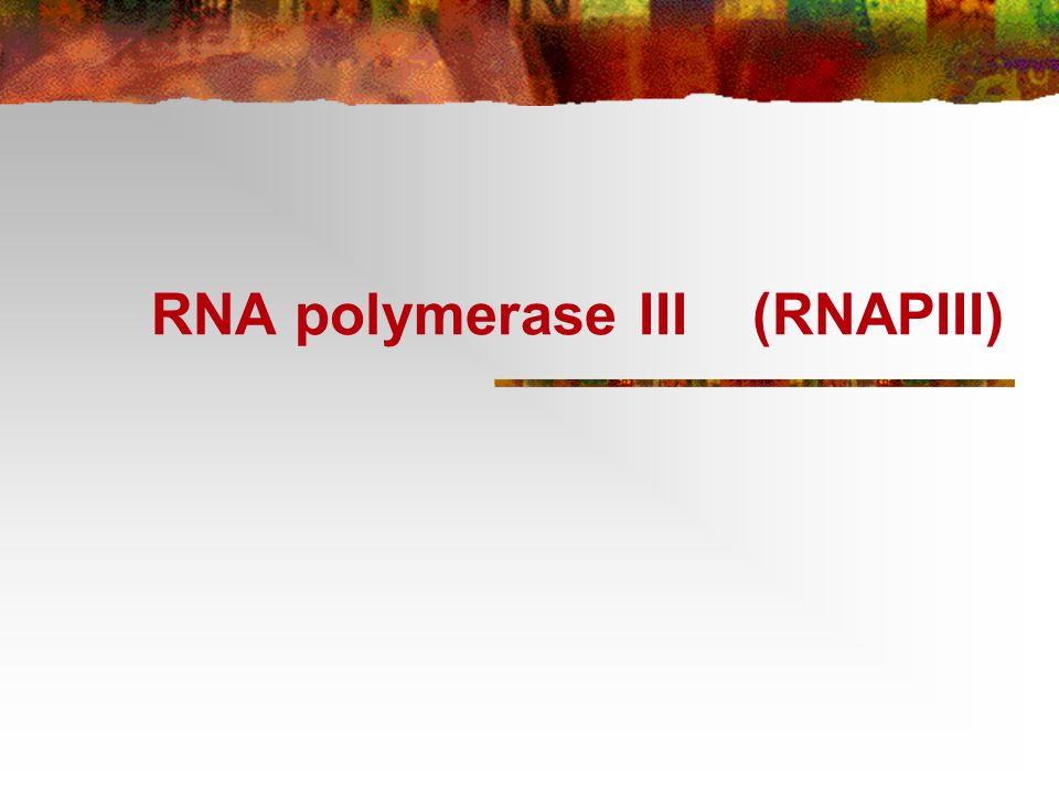 Klasse III gener transkribert av RNA polymerase III RNAPIII syntetiserer et fåtall ulike RNA som er små, stabile og ikke-translaterte tRNA, 5S RNA, 7SL RNA, U6 snRNA ++
