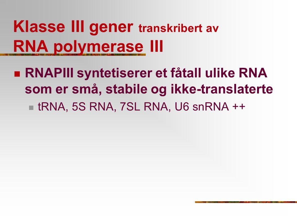 Promotere - tre typer AB +1 +8 +19 +52 +62 +73 ACI +1 +50 +64 +80 +97 +120 Typer promotere Type I: som i 5S rRNA genet, A-I-C blokker Type II: som i tRNA genene, A+B blokker Type III: atypiske uten intrageniske elementer