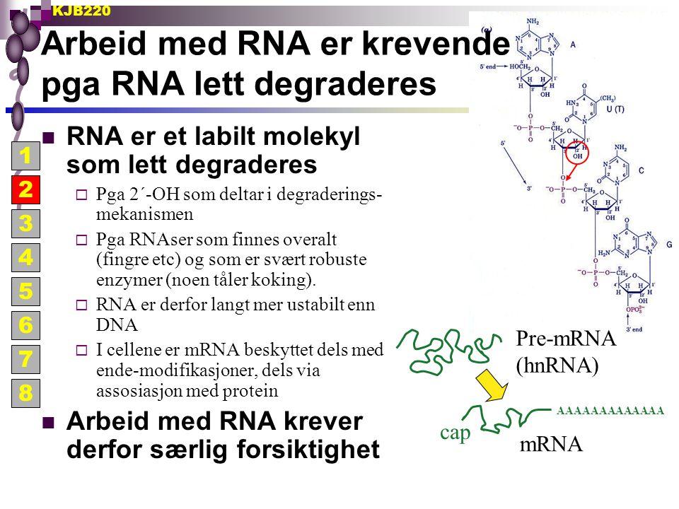 KJB220 Tiltak for å unngå RNA degradering Unngå RNaser (allestedsnærværende)  Bruk hansker (men ha ikke blind tiltro til hvor effektive de er)  Løsninger behandles med DEPC (diethylpyrocarbonate)  Bruk RNase-frie rør og pipettespisser (helst med filter)  Elektroforesekar behandles med H 2 O 2  Glass og metall varmebehandles: 180 o C minst 8 timer Bruk RNase inhibitorer  DEPC (diethylpyrocarbonate) er et reaktivt alkyleringsagens  Vanadyl ribonucleoside komplekser - ikke-kovalent inhibitors, må fjernes før RNA skal brukes videre pga inhibering av polymeraser  Protein inhibitorer - et ca 50 kDa cytoplasmatisk inhibitor protein isolert fra placenta binder sterkt til og inhiberer mange Rnaser (kommersielle navn: RNasin, prime inhibitor etc) 1 2 3 4 5 6 7 8