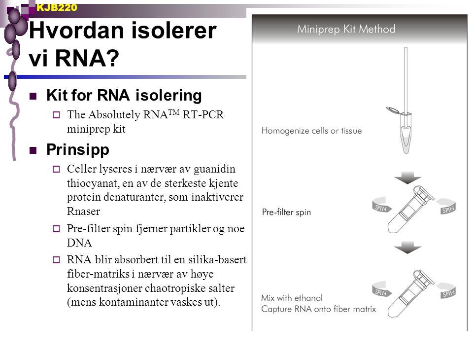 KJB220 Hvordan isolerer vi RNA? Kit for RNA isolering  The Absolutely RNA TM RT-PCR miniprep kit Prinsipp  Celler lyseres i nærvær av guanidin thioc