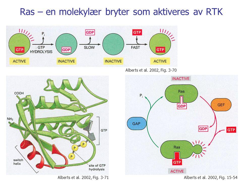 Ras – en molekylær bryter som aktiveres av RTK Alberts et al.