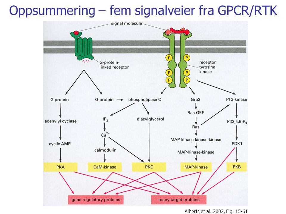 Oppsummering – fem signalveier fra GPCR/RTK Alberts et al. 2002, Fig. 15-61