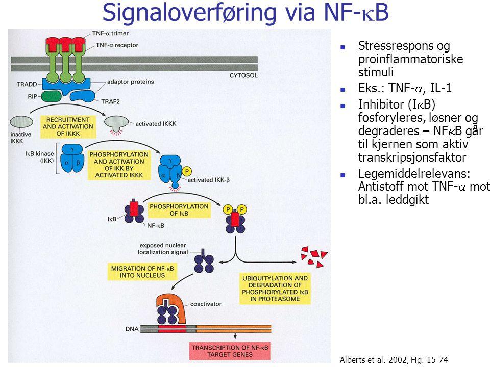 Signaloverføring via NF-  B Stressrespons og proinflammatoriske stimuli Eks.: TNF- , IL-1 Inhibitor (I  B) fosforyleres, løsner og degraderes – NF  B går til kjernen som aktiv transkripsjonsfaktor Legemiddelrelevans: Antistoff mot TNF-  mot bl.a.