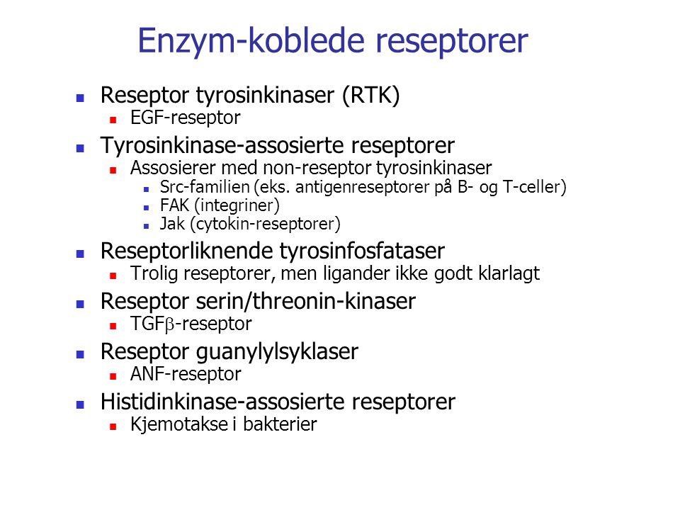 Enzym-koblede reseptorer Reseptor tyrosinkinaser (RTK) EGF-reseptor Tyrosinkinase-assosierte reseptorer Assosierer med non-reseptor tyrosinkinaser Src-familien (eks.