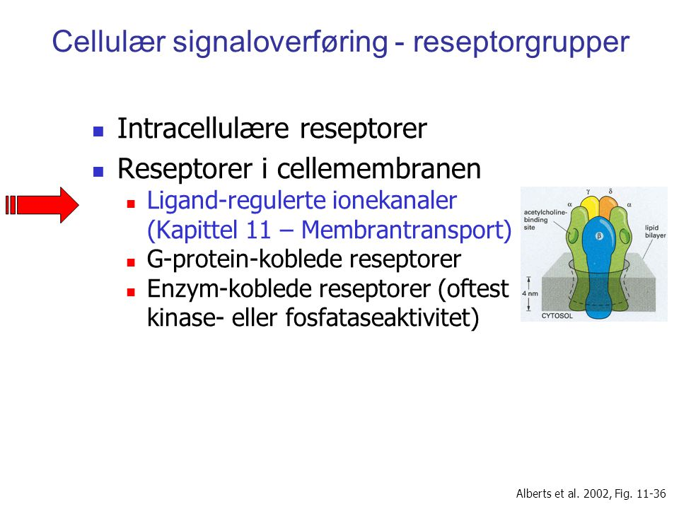 Cellulær signaloverføring - reseptorgrupper Intracellulære reseptorer Reseptorer i cellemembranen Ligand-regulerte ionekanaler (Kapittel 11 – Membrant