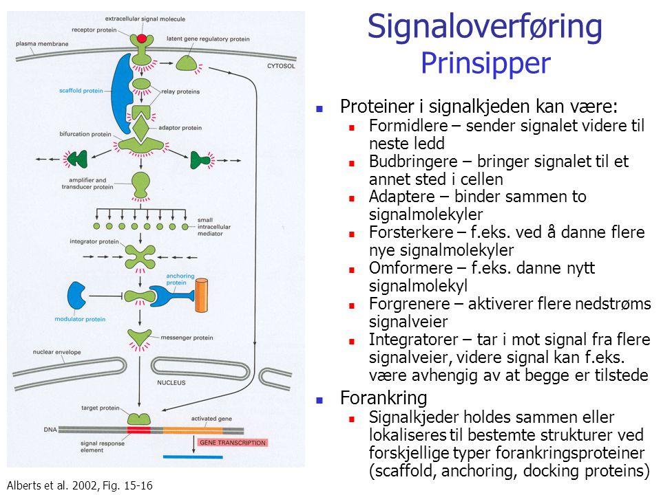 Signaloverføring Prinsipper Proteiner i signalkjeden kan være: Formidlere – sender signalet videre til neste ledd Budbringere – bringer signalet til e