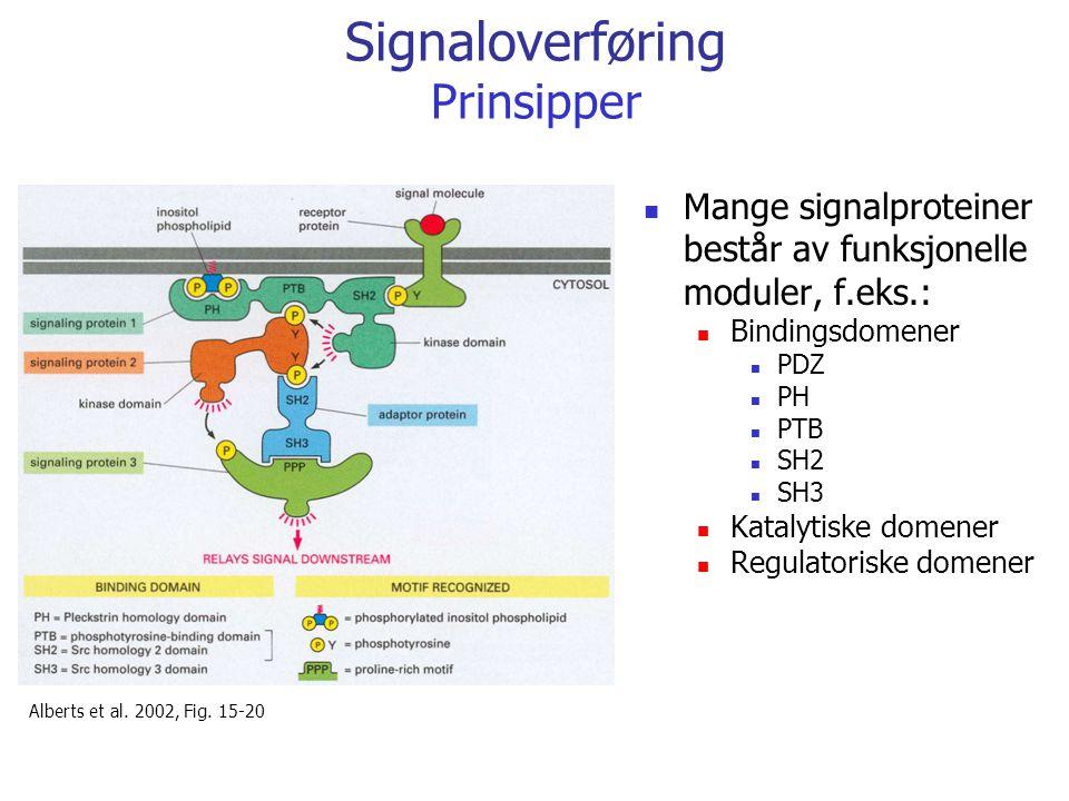 Signaloverføring Prinsipper Mange signalproteiner består av funksjonelle moduler, f.eks.: Bindingsdomener PDZ PH PTB SH2 SH3 Katalytiske domener Regul