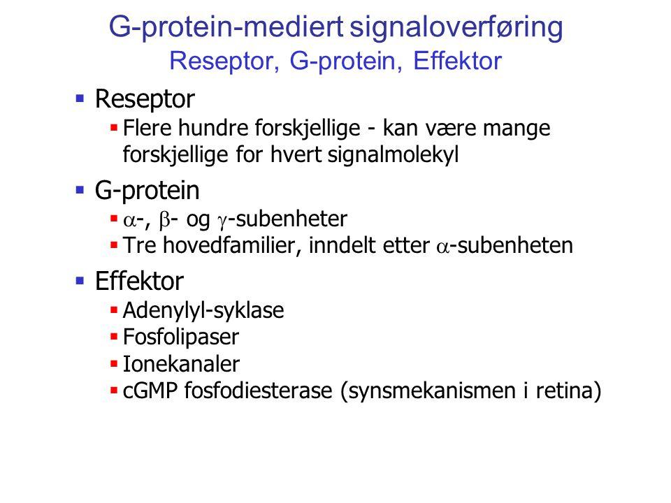 G-protein-mediert signaloverføring Reseptor, G-protein, Effektor  Reseptor  Flere hundre forskjellige - kan være mange forskjellige for hvert signal