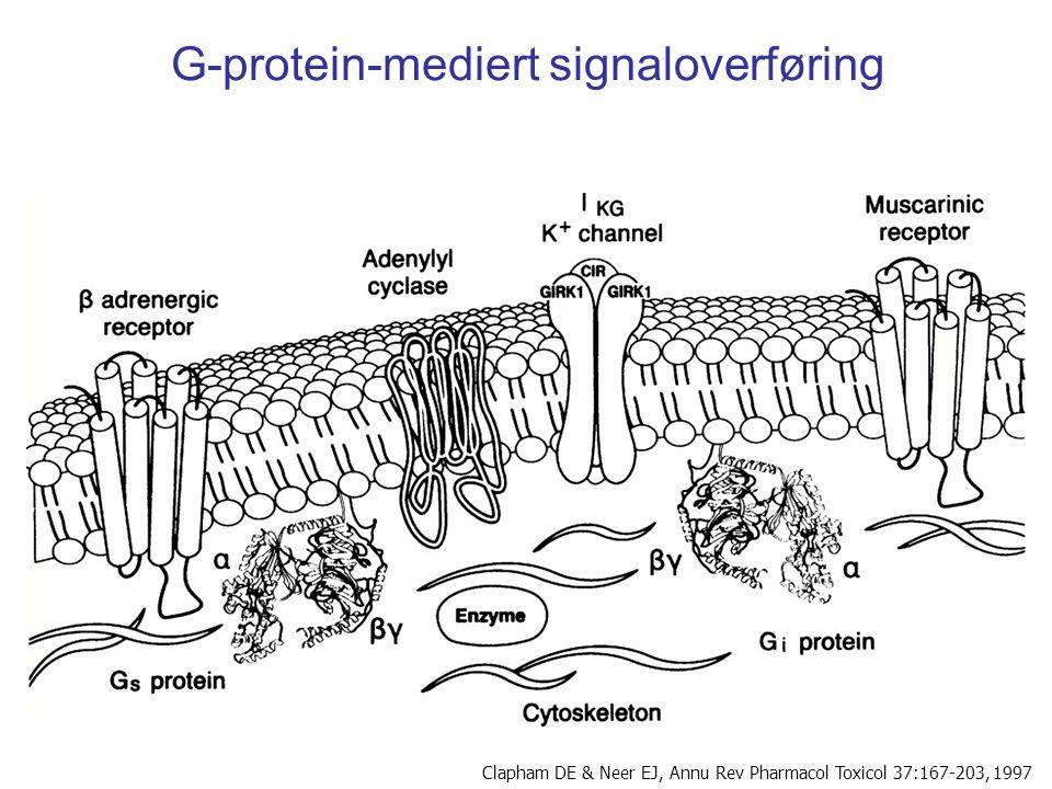 G-protein-mediert signaloverføring Clapham DE & Neer EJ, Annu Rev Pharmacol Toxicol 37:167-203, 1997