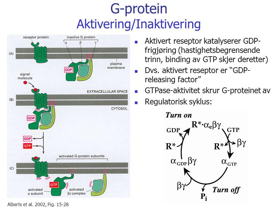 G-protein Aktivering/Inaktivering Alberts et al. 2002, Fig. 15-28 Aktivert reseptor katalyserer GDP- frigjøring (hastighetsbegrensende trinn, binding