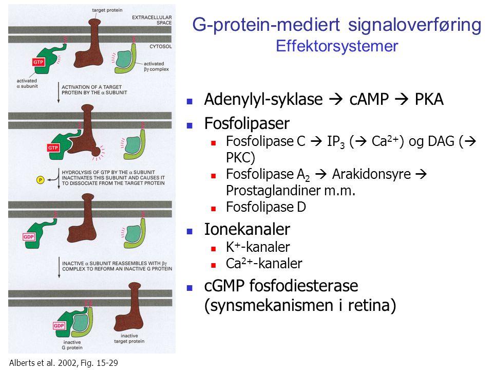 G-protein-mediert signaloverføring Effektorsystemer Adenylyl-syklase  cAMP  PKA Fosfolipaser Fosfolipase C  IP 3 (  Ca 2+ ) og DAG (  PKC) Fosfol