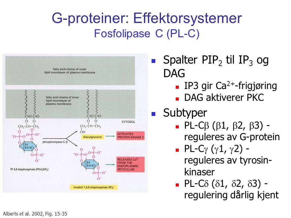 G-proteiner: Effektorsystemer Fosfolipase C (PL-C) Spalter PIP 2 til IP 3 og DAG IP3 gir Ca 2+ -frigjøring DAG aktiverer PKC Subtyper PL-C  (  1, 