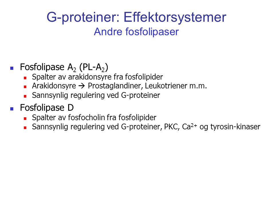 G-proteiner: Effektorsystemer Andre fosfolipaser Fosfolipase A 2 (PL-A 2 ) Spalter av arakidonsyre fra fosfolipider Arakidonsyre  Prostaglandiner, Le