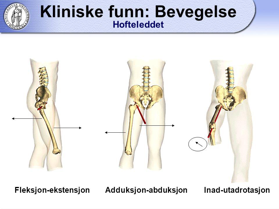 Fleksjon-ekstensjon Adduksjon-abduksjon Inad-utadrotasjon Kliniske funn: Bevegelse Hofteleddet