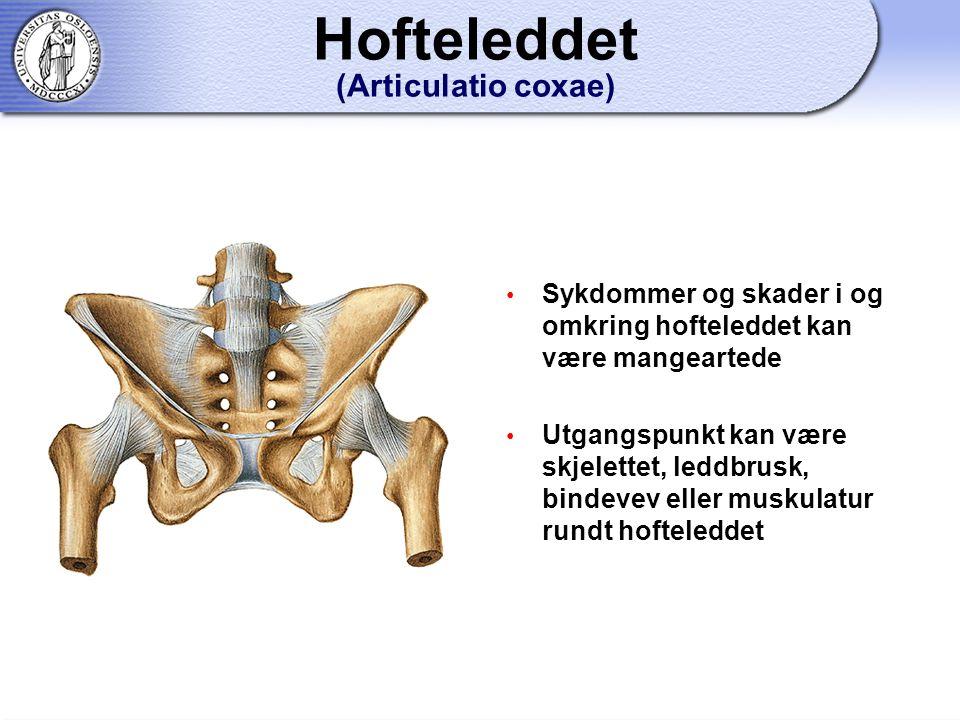 Sykdommer og skader i og omkring hofteleddet kan være mangeartede Utgangspunkt kan være skjelettet, leddbrusk, bindevev eller muskulatur rundt hofteleddet Hofteleddet (Articulatio coxae)